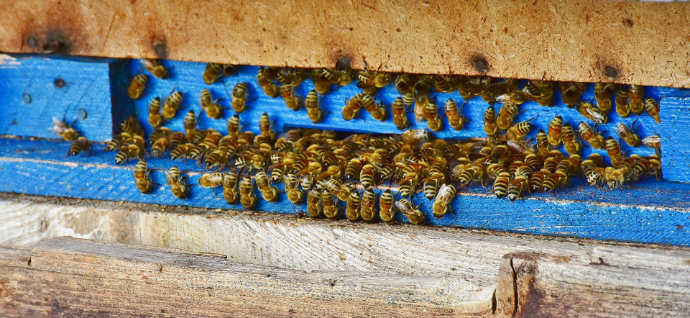 Bienenvolk im Einsatz